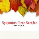 Sycamore Tree Service Brockton MA Logo